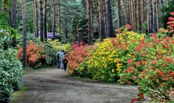 Tekerés a Jeli Arborétumba